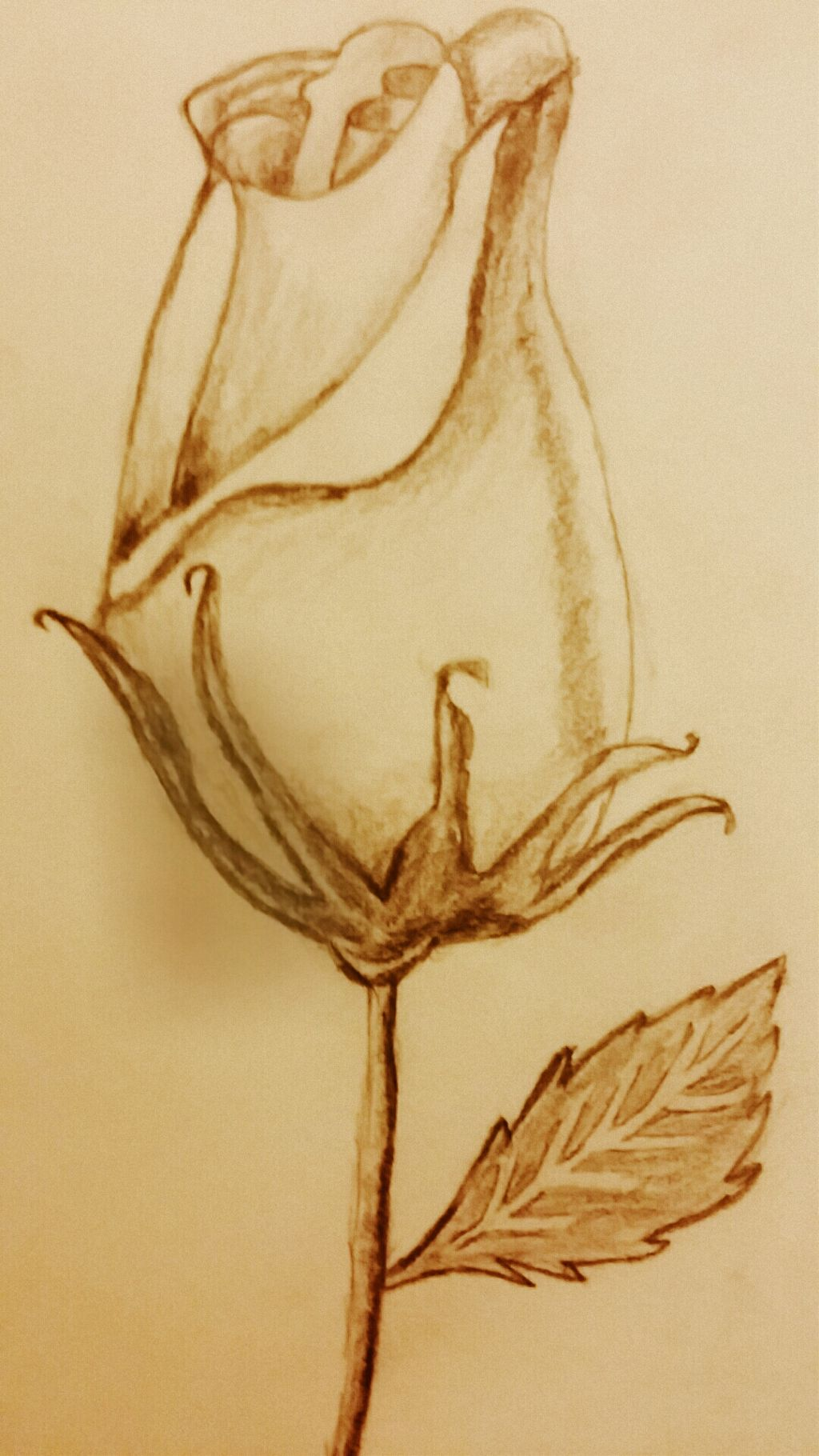 Drawing By Me Pencil Shading Rose Cute Love Flower P