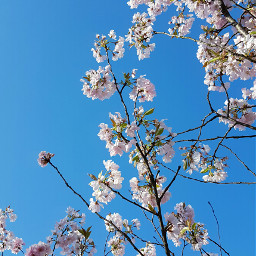 nature spring tree photography