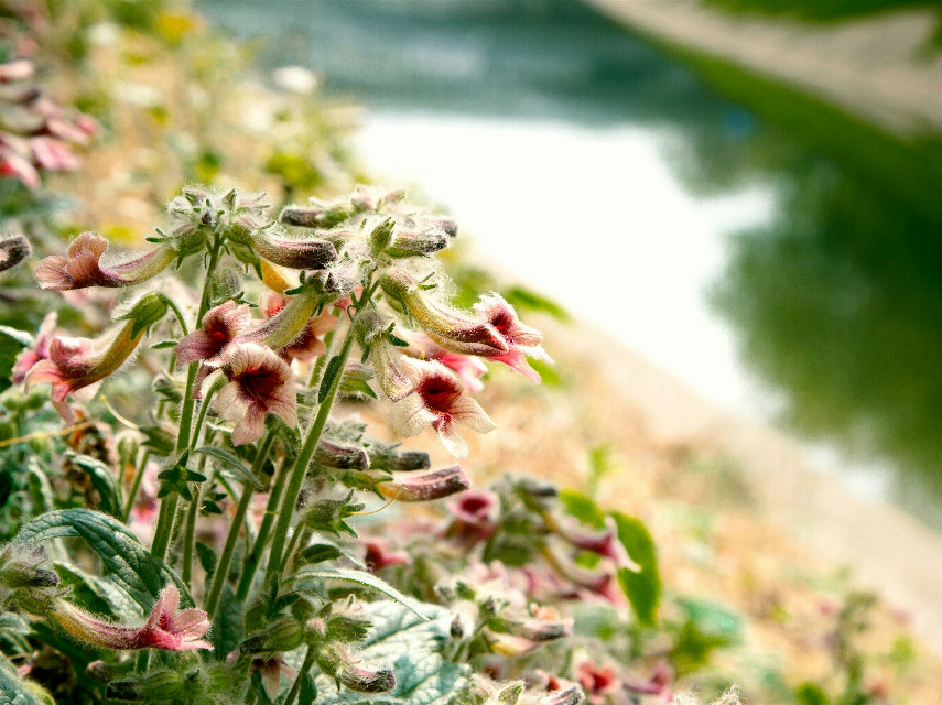 Wild flowers  #flower  #photography  #spring  #nature  #emotions  #colorful  #bokeh  #river  #beijing