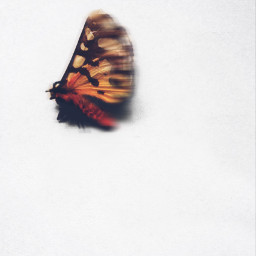 motionblure butterfly colors shadow freetoedit