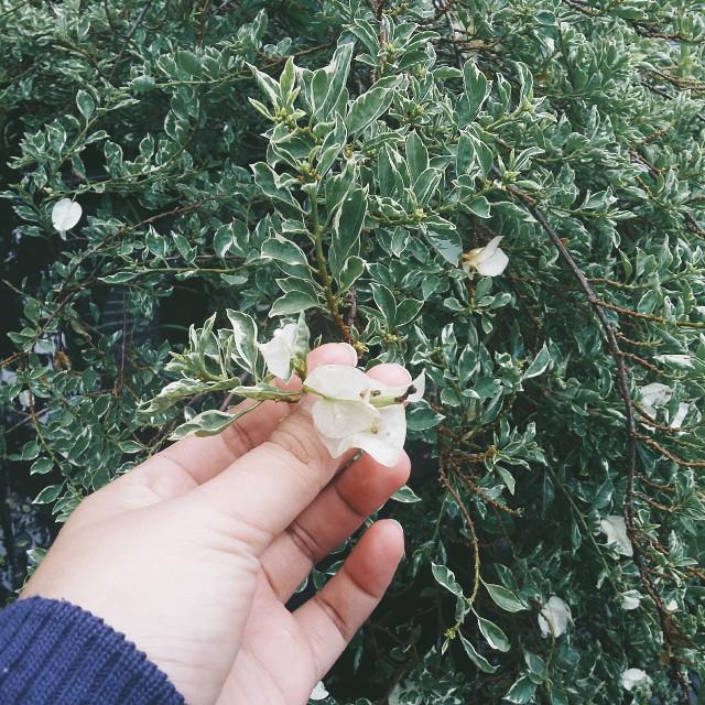 🍃🍃🍃 #flower #natural #green