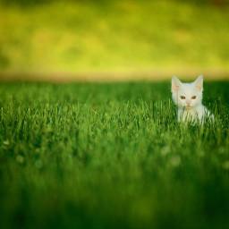 cat cats green