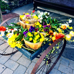 flowers wheelbarrow pennsylvania colorful