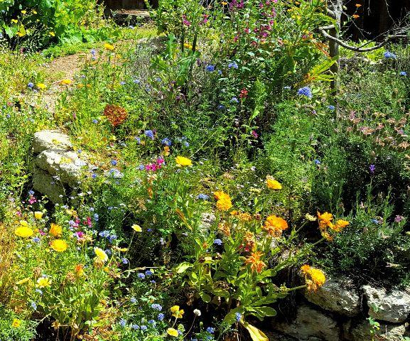 wppnature flowers garden sunny nature