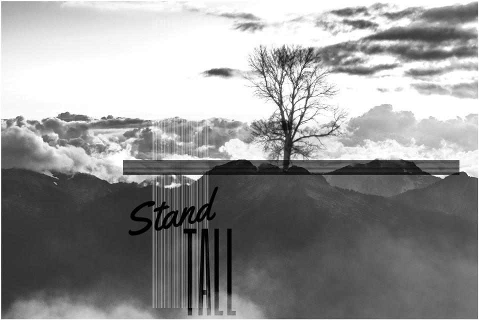@freetoedit image with #shapemask and my #tree #blackandwhite