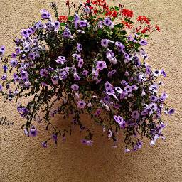 rawphoto hangingflowers purpleflowers orangeflowers onthewall