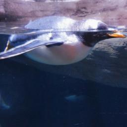 swim water blue sun pemguin