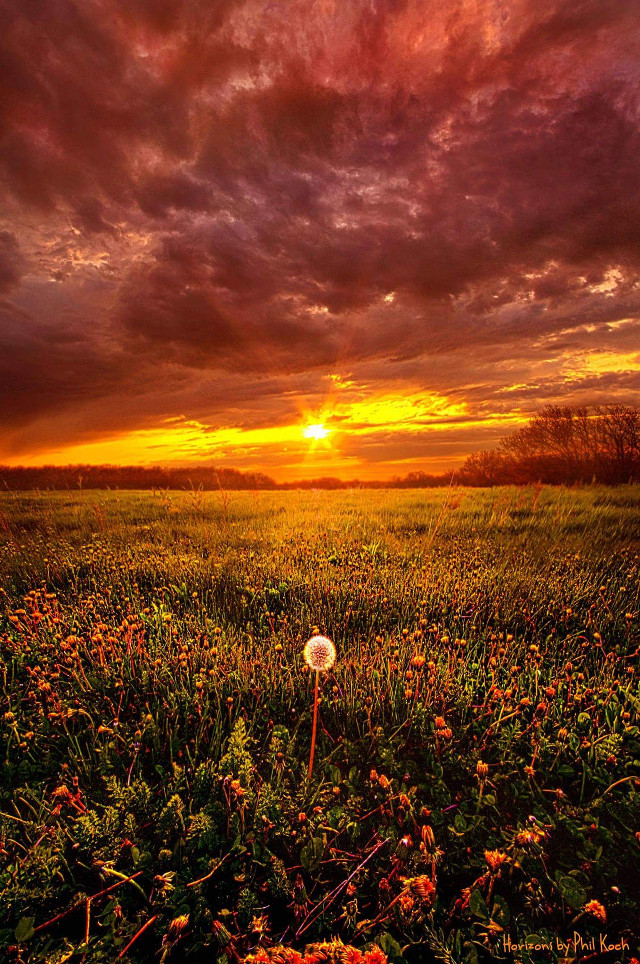 """"""" A Thousand Years From Yesterday """" - Horizons by Phil Koch.  #Wideangle #colorful #nature #photography #flower #love #spring #travel #country #rural #canon #peace #sunrise #weather #outdoors #inspiration #Clouds #Light  #dandeelion"""