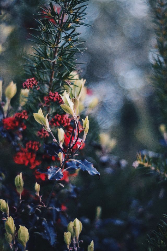 lil bit of photography #FreeToEdit #red #green #bokeh #interesting #photography #plant #plants