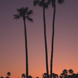 beachnight sunset home sillouette mood freetoedit