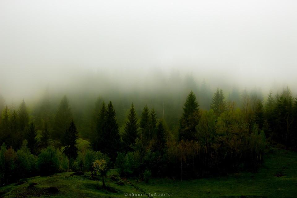 Mist #interesting #landscapephotography #mountains #travel #nature #freetoedit