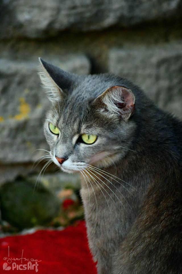 #petsandanimals #pets #kitty #cats #cute #sanantonio #colorful #emotions #nature #photography